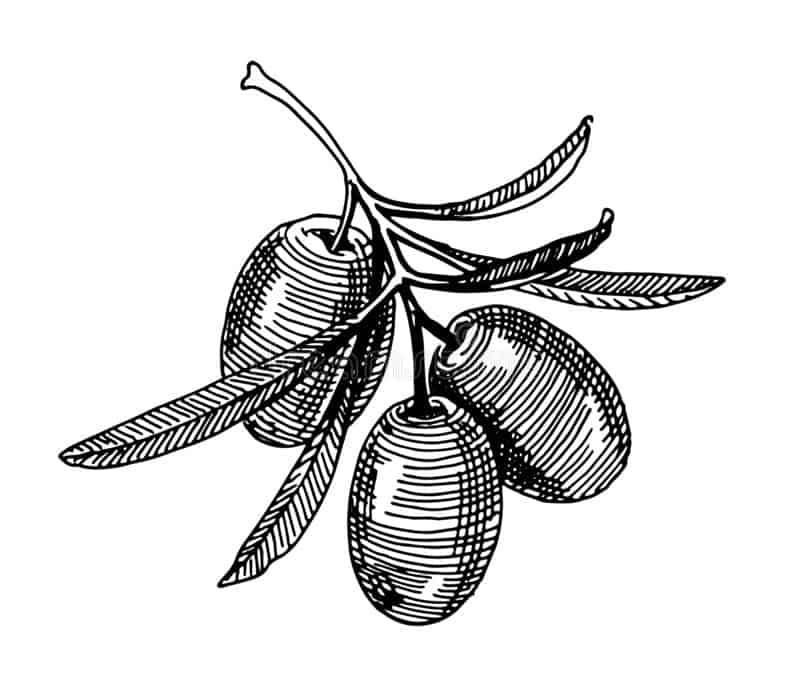 El aceite de la variedad Frantoio de Pradolivo