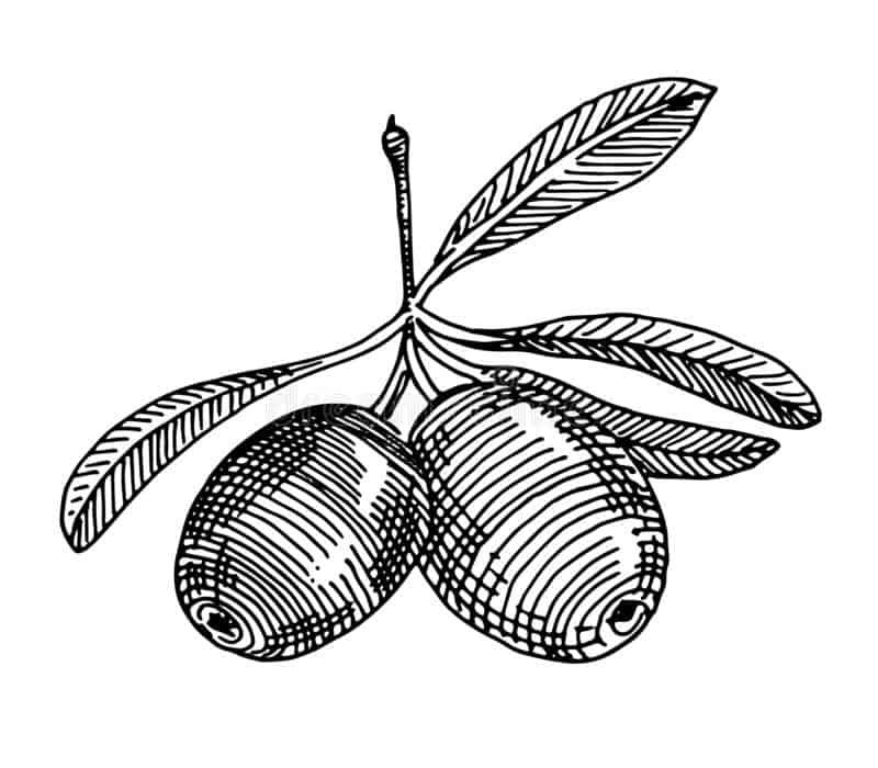 El aceite de la variedad Arbequina de Pradolivo