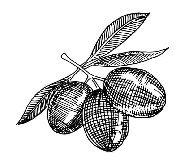 El aceite de la variedad Picual de Pradolivo