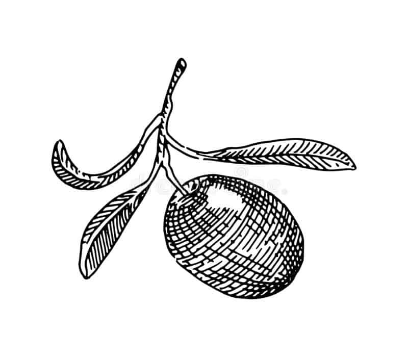 El aceite variedad Hojiblanca de Pradolivo